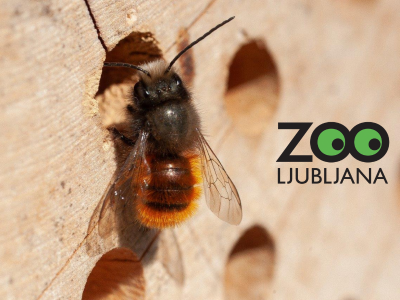 Dogodivščine ob Svetovnem dnevu čebel - spoznajmo samotarske čebele!