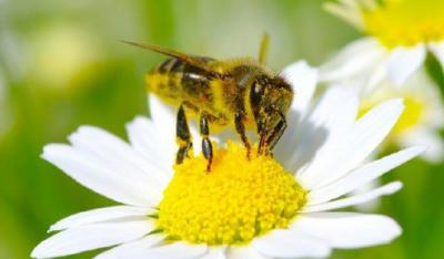 Prireditev ob svetovnem dnevu čebel v Šentjakobu v Rožu