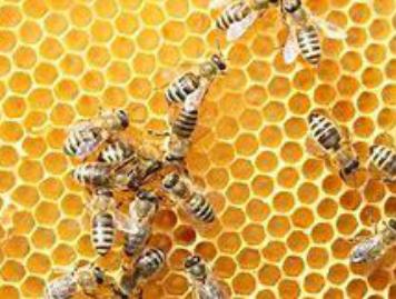 Prireditev ob svetovnem dnevu čebel